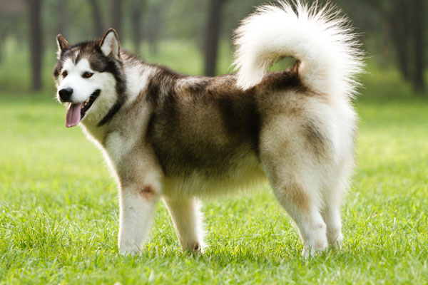 assicurazione cane polizza rc danni terzi